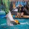 Дельфинарии, океанариумы в Старбеево